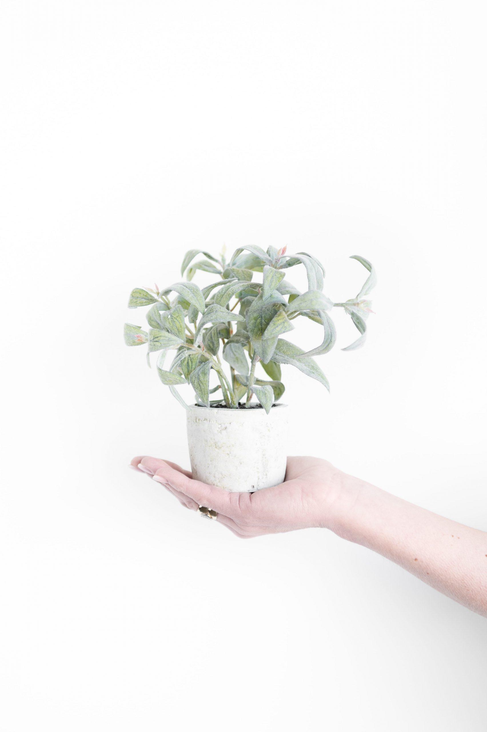 Faux Floral Plants